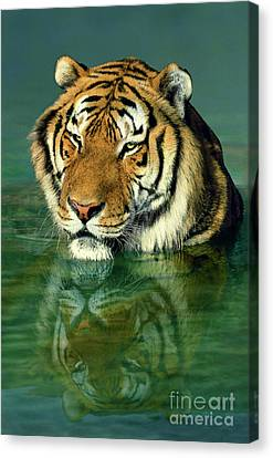 Siberian Tiger Reflection Wildlife Rescue Canvas Print by Dave Welling