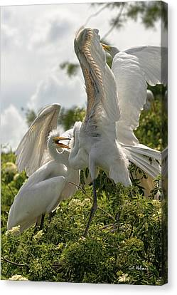 Sibling Squabble Canvas Print by Christopher Holmes