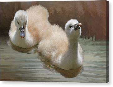 Swans... Canvas Print - Siblings by Donna Kennedy