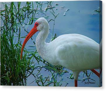 Side Profile Canvas Print by Judy  Waller