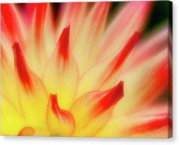 Canvas Print featuring the photograph Side View by Greg Nyquist