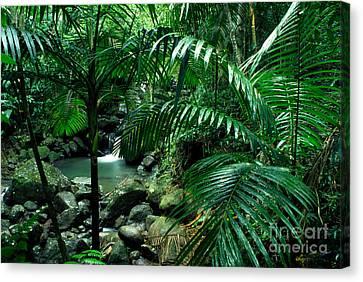 Sierra Palms Waterfall El Yunque Canvas Print by Thomas R Fletcher
