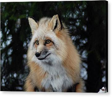 Sierra's Profile Canvas Print