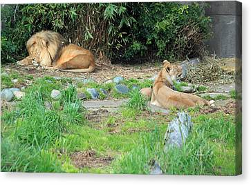 Siesta Time Canvas Print by Suzanne Gaff