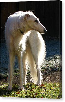 Canvas Print featuring the photograph Sighthound by Deborah Johnson
