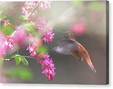 Sign Of Spring 2 Canvas Print by Randy Hall