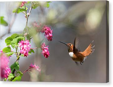 Sign Of Spring 3 Canvas Print by Randy Hall