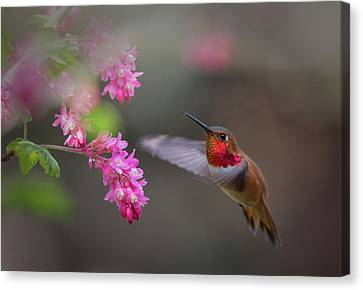 Sign Of Spring Canvas Print by Randy Hall