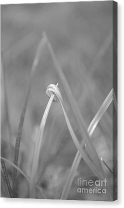 Signed By Nature 10 Canvas Print