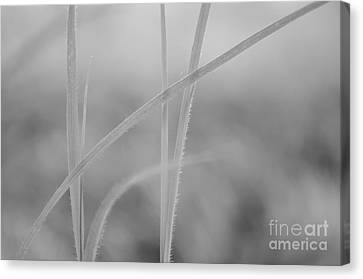 Signed By Nature 8 Canvas Print