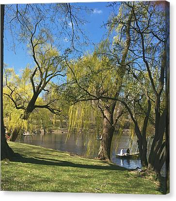Signs Of Spring In Central Park 3 Canvas Print by Muriel Levison Goodwin