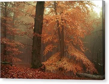 Silence In Misty Woods Canvas Print by Jenny Rainbow