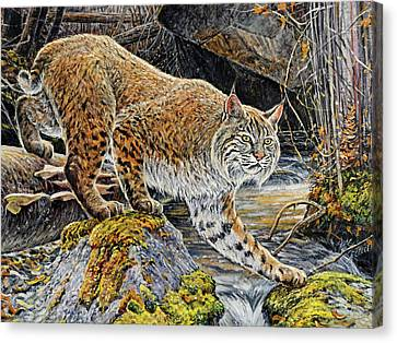 Bobcats Canvas Print - Silent Caution by Steve Spencer