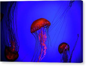 Canvas Print featuring the photograph Silent Jellies by Jeff Folger
