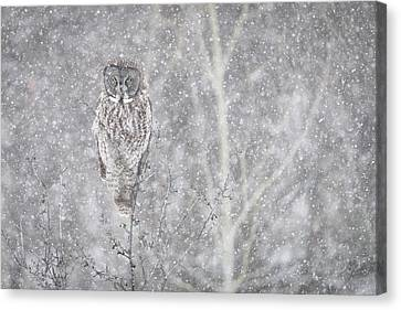 Canvas Print featuring the photograph Silent Snowfall Landscape by Everet Regal