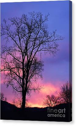 Silhouette At Dawn Canvas Print