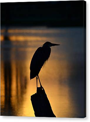 Silhouette At Sunset Great Blue Heron Canvas Print