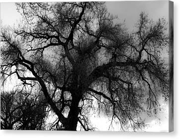 Silhouette Canvas Print by James BO  Insogna