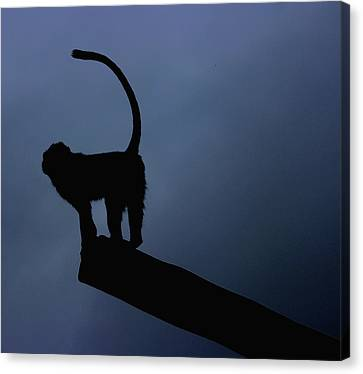 Year Of The Monkey Canvas Print - Silhouette by Martin Newman