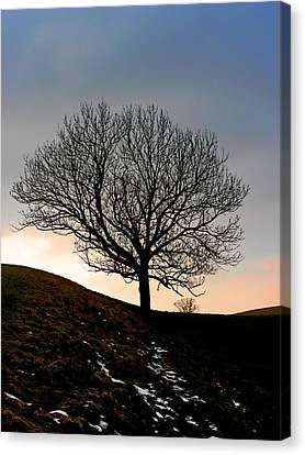 Silhouette Of A Tree On A Winter Day Canvas Print by Christine Till