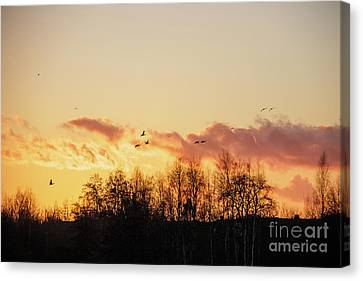 Silhouette Of Birds Wildfowl Geese Flying Off To Roost At Sunset Canvas Print