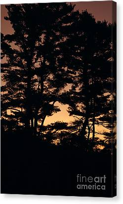 Silhouette Of Forest  Canvas Print by Erin Paul Donovan