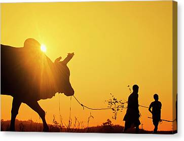 Srdjan Kirtic Canvas Print - Silhouette Of Two Young Boys With A Bull At Sunrise In The Countryside Of Trang, Thailand by Srdjan Kirtic