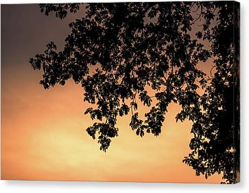 Silhouette Tree In The Dawn Sky Canvas Print