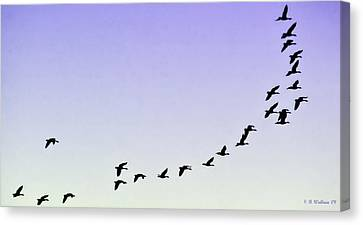 Silhouetted Flight Canvas Print by Brian Wallace