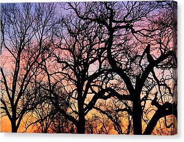 Canvas Print featuring the photograph Silhouettes At Sunset by Chris Berry