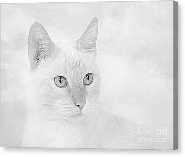 Flame Point Siamese Canvas Print - Silver Flame Point Siamese by Elisabeth Lucas