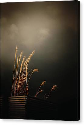 Silver Grass Canvas Print