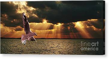 Silver Gull And God Clouds - Sunset At Sea.original East Australian Photo Art. Canvas Print by Geoff Childs
