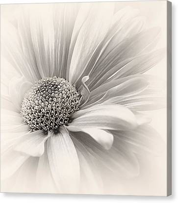 Canvas Print featuring the photograph Silver Mist by Darlene Kwiatkowski