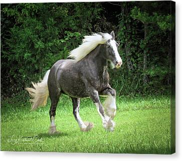 Gypsy Cob Canvas Print - Silver Reign Just Dazzling by Terry Kirkland Cook