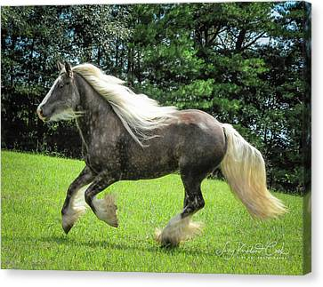 Gypsy Cob Canvas Print - Silver Reign Wow by Terry Kirkland Cook