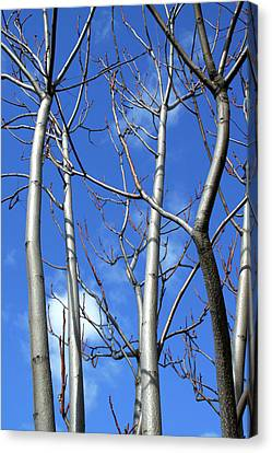 Silver Smooth Canvas Print