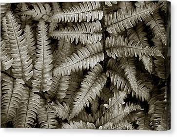 Silvery Ferns Canvas Print