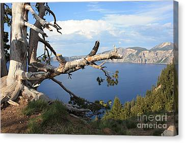 Silvery Tree Over Crater Lake Canvas Print by Carol Groenen