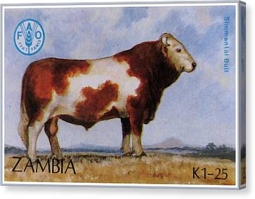 Simmental Bull Canvas Print by Lanjee Chee