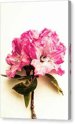 Simple Beauty Canvas Print by Jorgo Photography - Wall Art Gallery