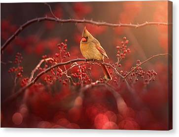 Simple Beauty Canvas Print by Rob Blair