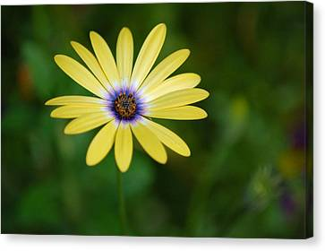Simple Flower Canvas Print by Jennifer Englehardt