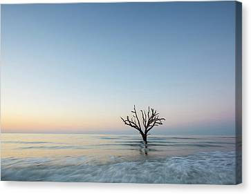 Simple Tree Canvas Print by Jon Glaser