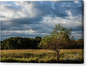 Canvas Print featuring the photograph Simplicity by Iris Greenwell