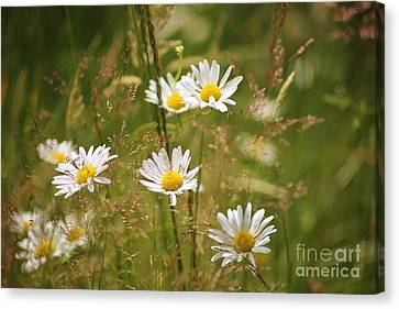 Simplicity Canvas Print by Sheila Ping