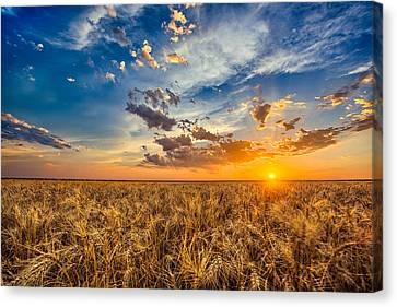 Harvest Canvas Print - Simplicity by Thomas Zimmerman