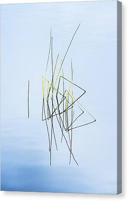 Simple Beauty In Colors Canvas Print - Simplicity by Vishwanath Bhat