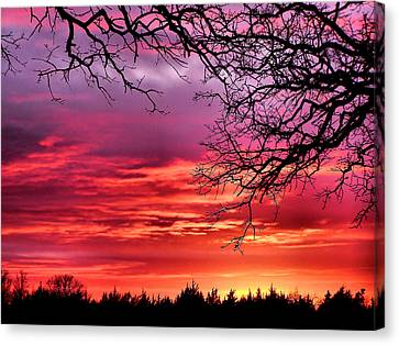 Simply Amazing Canvas Print by Karen M Scovill