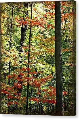 Simply Autumn Canvas Print by Joan  Minchak